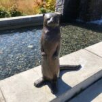 otter at city hall